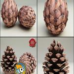 TurboSquid Fir Cones Collection