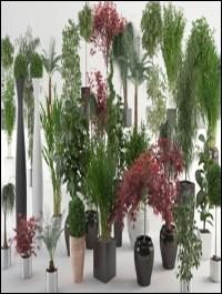 VIZPARK Interior Plants for 3ds Max