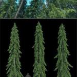 R&D Group iTrees vol 4 Fir Trees