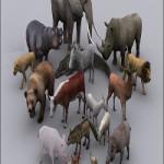 Toon Animals Pack