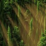 HD Trees vol.5 for Cinema4D