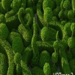 HD Trees vol. 3 for Cinema4D
