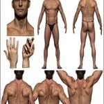 3D Scan Store Colour Male Anatomy Bundle 01