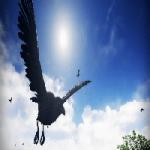 Unreal Engine 4 Marketplace Birds