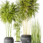Bamboo and Equisetum