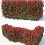 CgTrader Berberis Thunbergii Nr7 Atropurpurea Nana customizable hedge 3D model