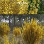 VIZPARK Forsythia Bushes: Set of 10 Shrubs