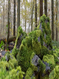 Moss 7 Species and Stones - PBR Asset Kit Low-poly 3D model