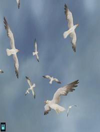 Bird Flock: Seagull
