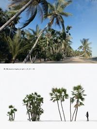 Plant Models Vol 15