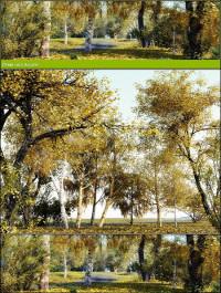R&D Group iTrees vol 1 Autumn