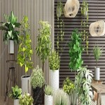 Plant Potted Plants Green Plant Combination