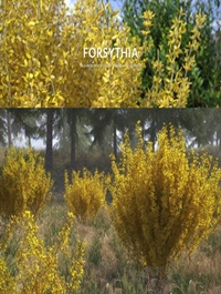 VIZPARK Forsythia Bushes: Set of 10 Shrubs