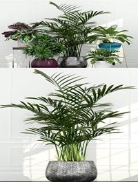 Plants Collection 155 3d models