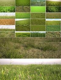 R & D Group iGrass vol 1 3D Models of Grass Field Plants