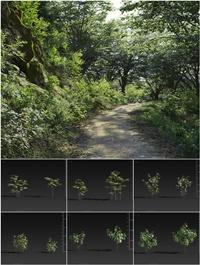 MAXTREE Plant Models Vol 27