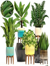Collection of plants 197