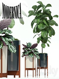 Plants collection 69 Modernica pots