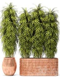 Bamboo in a copper pot