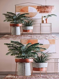 Modern decorative plant combination