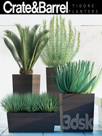 PLANTS 82
