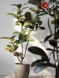 Plant, potted