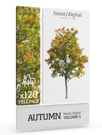 Forest Digital Autumn Trees Vol. 5 Cutout Trees