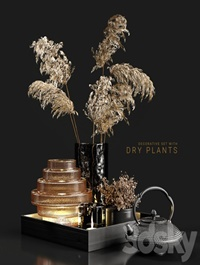 Decorative set with dry plants 3