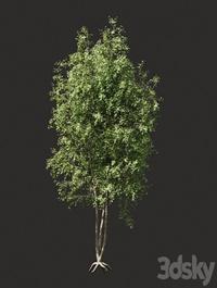 Summer tree 03