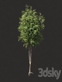 Summer tree # 2