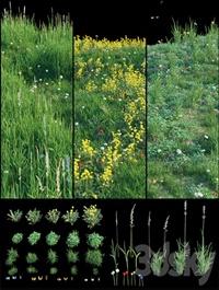 Set for landscaping 3