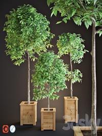 Three trees interior