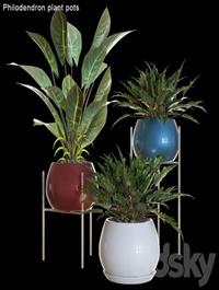 Philodendron plant pots # 2