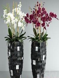 Orchid 6 3d Model